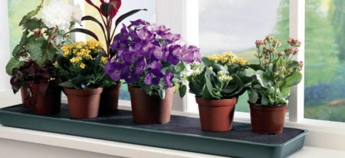 Какие растения принесут в дом счастье и удачу?