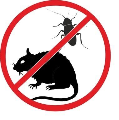 Химия против мышей и тараканов