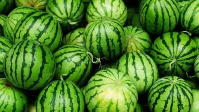 Херсонские аграрии хотят запатентовать местные арбузы