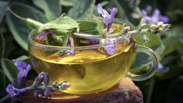 Рецепти цілющих настоїв і чаїв з шавлії