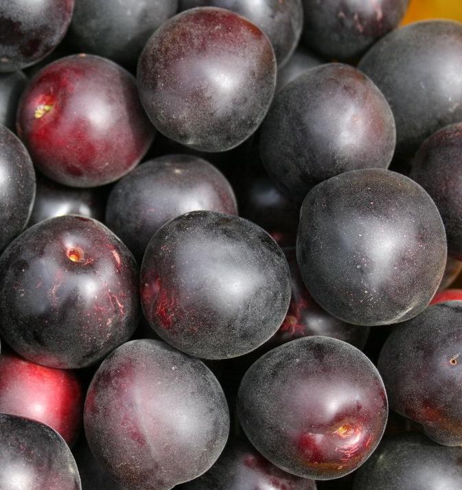 Черный абрикос: стоит выращивать или нет