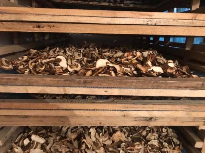В Карпатах небывалый урожай грибов