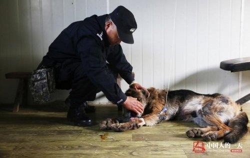 В Китае открыли дом престарелых для служебных собак
