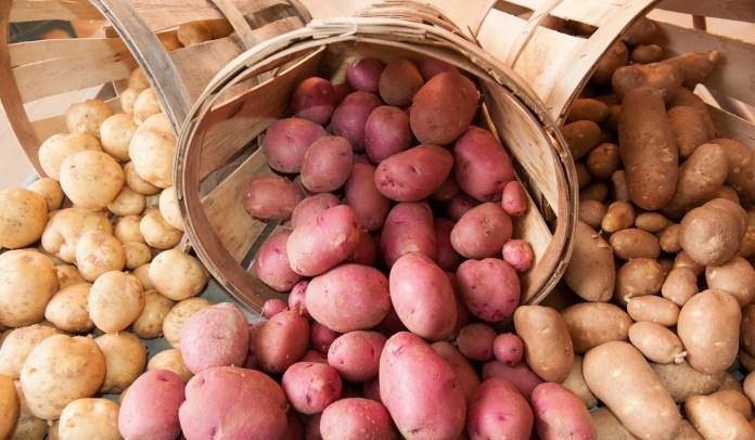 Експерти розповіли про майбутній дефіцит картоплі
