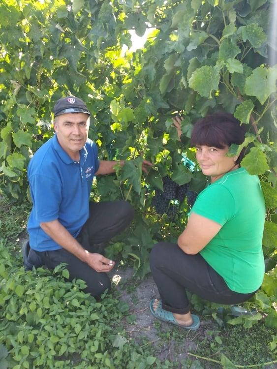 Харьковчанка выращивает виноград на песке