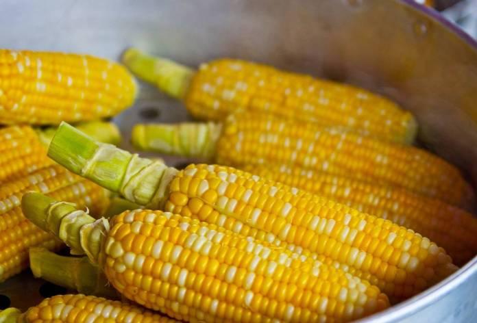 В Кировоградской области культивируют самые вкусные и самые сладкие сорта сахарной кукурузы