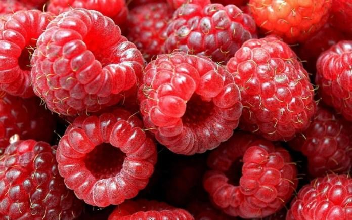 Черниговские садоводы рассказали о самых урожайных сортах малины