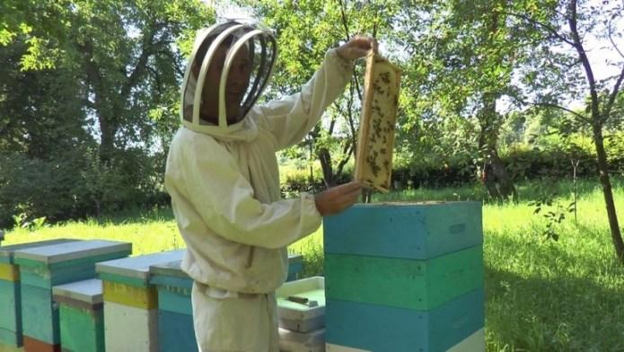На Прикарпатье собирают лавандовый мед