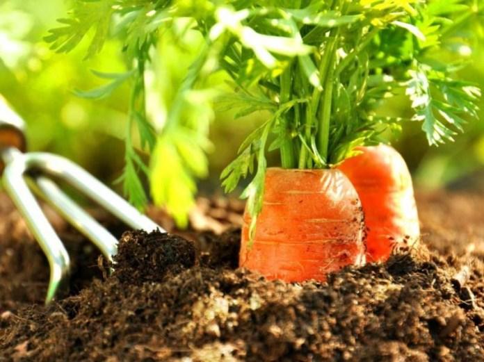 Каким овощам важен свет
