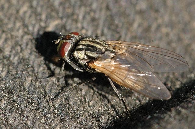 Пытаясь убить муху, пожилой мужчина разрушил дом