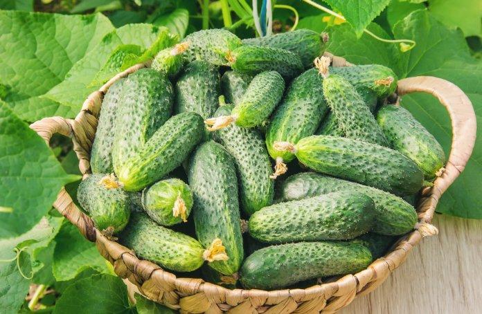 Одесский припортовый завод выращивает экологически чистые овощи