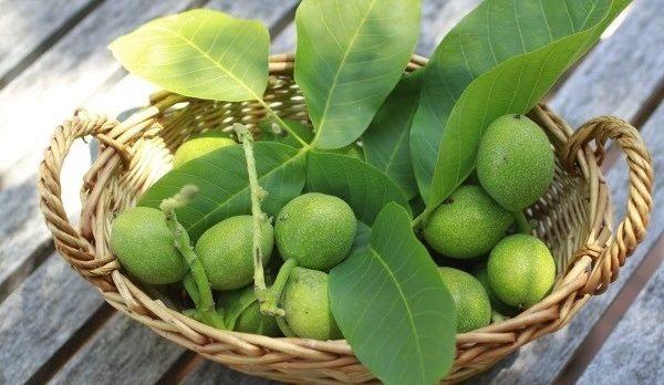 Сеянец грецкого ореха или саженец: кому отдать препочтение