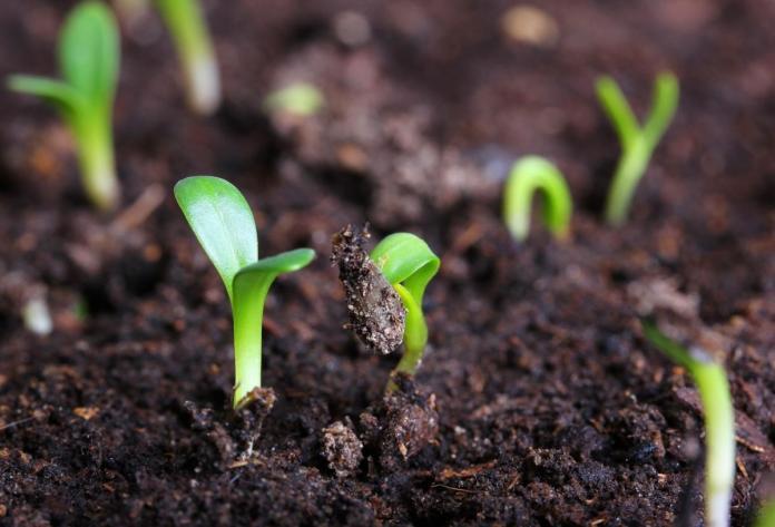 Когда можно высевать овощные культуры в открытый грунт