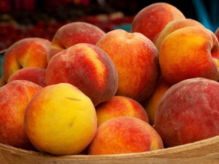 Садовод из Днепропетровской области подобрал самые удачные сорта для персикового конвейера