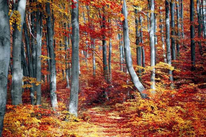 Погода в Україні на четвер, 14 жовтня: святкова…