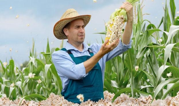 У немецкого фермера на поле «вырос» попкорн