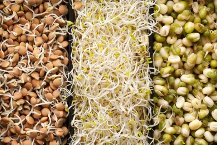 Эффективные способы проращивания семян