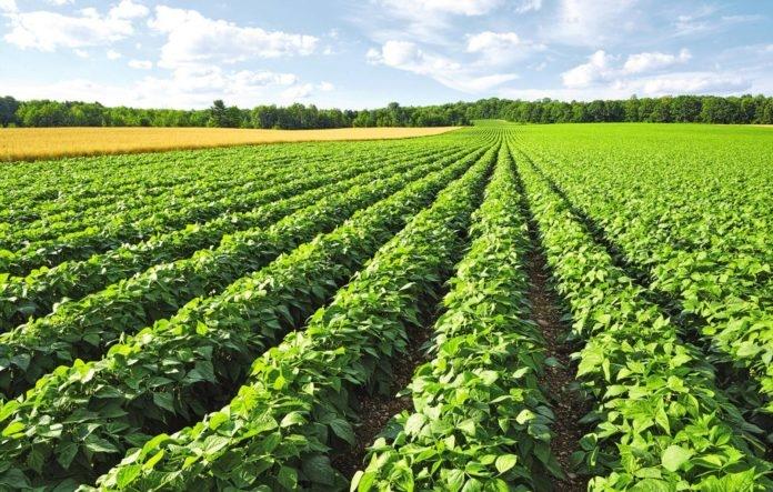 Ученые из Америки хотят научить растения вытягивать азот из воздуха