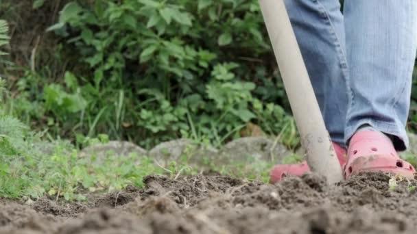 Рыхлить почву на участке или нет?