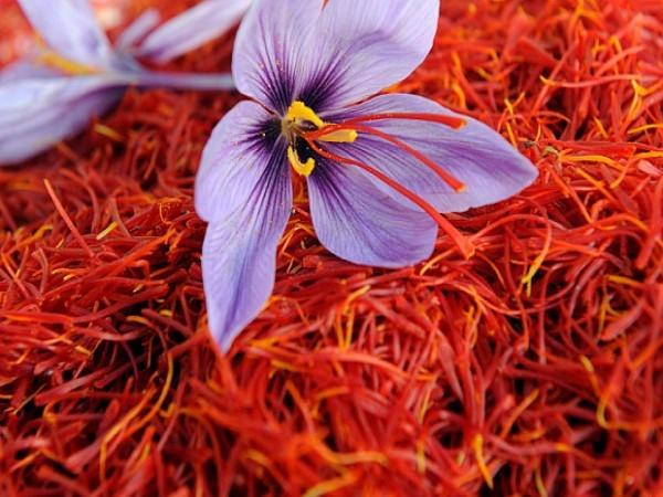 Из 200 цветков шафрана получают 1 грамм специи