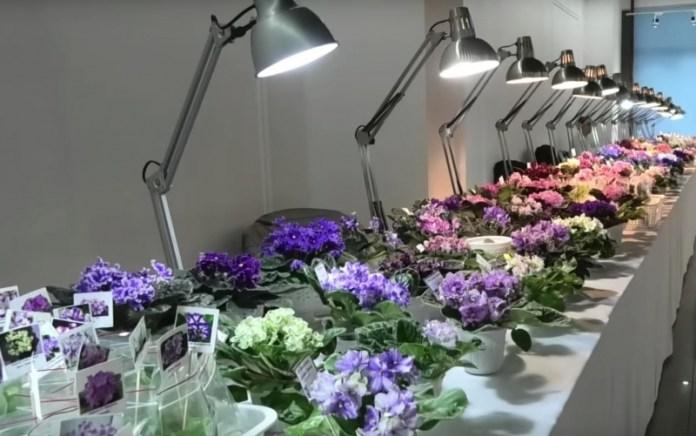 В Одессе покажут экзотические фиалки и растения-хищники