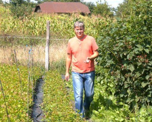 Фермер из Прикарпатья выращивает 15 сортов голубики