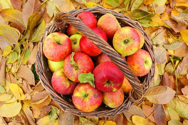 Названо найкращий спосіб зберігання яблук