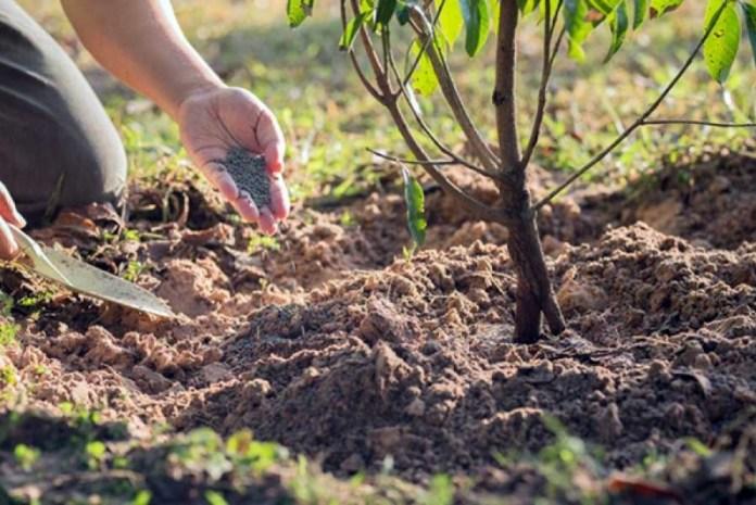 Сейчас самое время позаботиться о будущем урожае