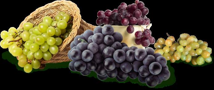 Древний врач - виноград