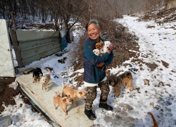 Пожилая кореянка спасает собак от поваров