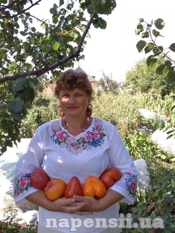 Киянка щороку вирощує 200 сортів томатів