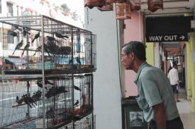 man looking at a bird cage