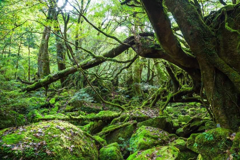 Ryukyu Islands, Japan