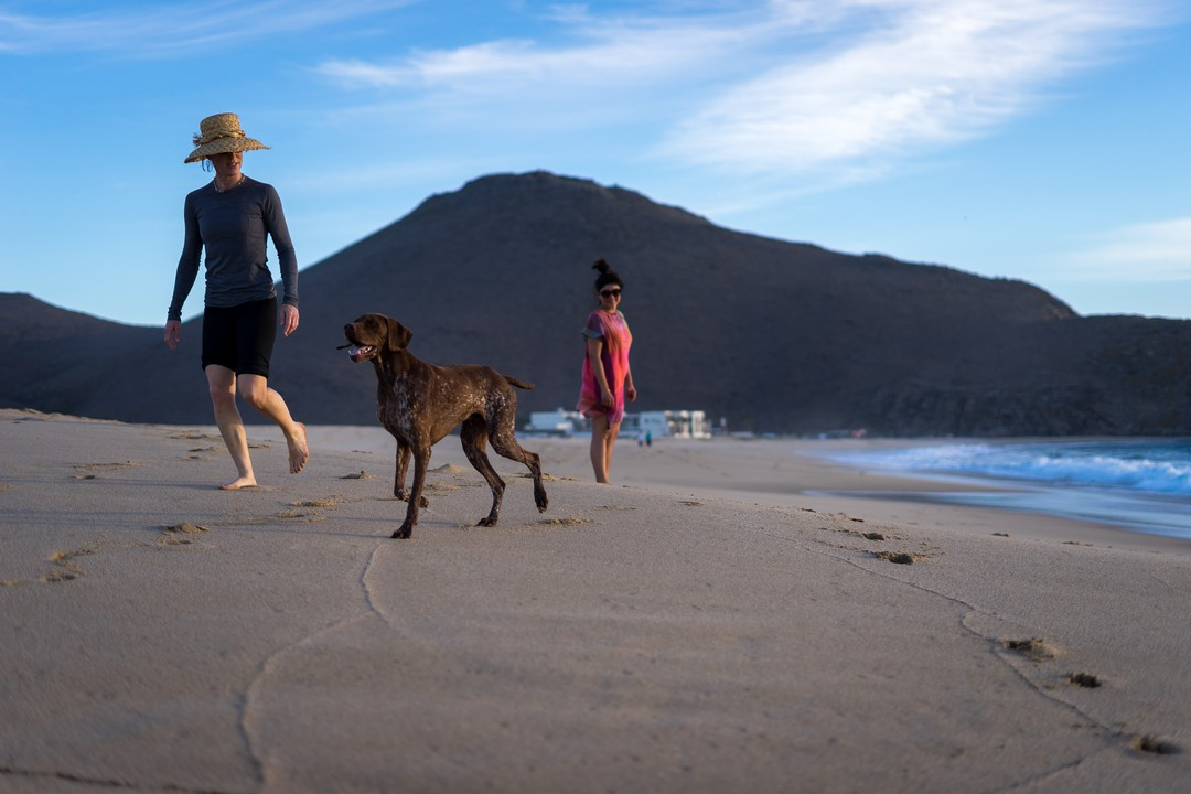 Honorable Mention Class 1, Anthony Charles, Dog Jog Beach
