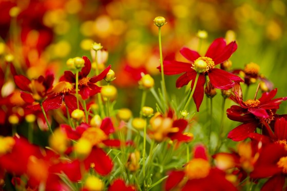 Lets Bloom Red by Veachel Dixon