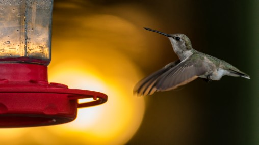 Hummer by Allen Irby