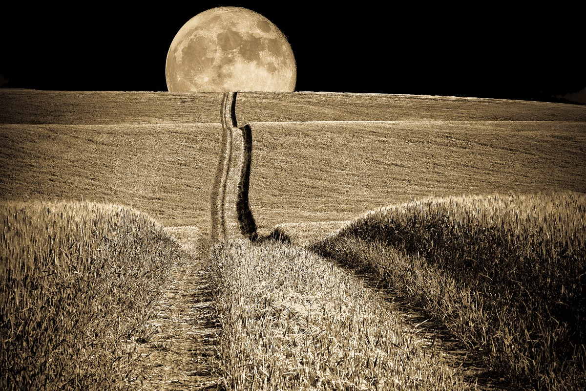 Mark Laussade - Moon Over Wheatfield