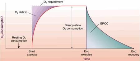 excess-post-oxygen-consumption