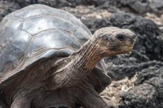 November 2006 The Galápagos Islands, the Pacific Ocean, Ecuador