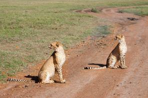 May 2007 Maasai Mara, Kenya, East Africa