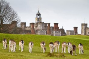 January 2012 Knole Park, Sevenoaks, Kent, UK