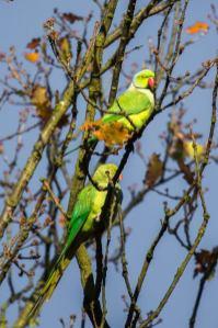 December 2012 Richmond Park, London, UK