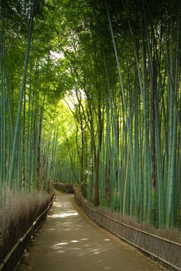 May 2013 Arashiyama bamboo forest, Kyoto, Japan