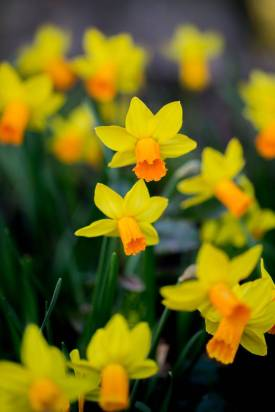 March 2014 RHS Garden Wisley, London, UK