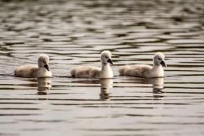 May 2014 Pen Ponds, Richmond Park, London, UK