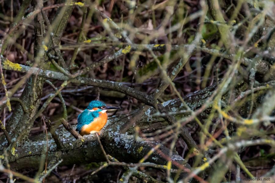 January 2017, RSPB Rye Meads, Hertfordshire, UK