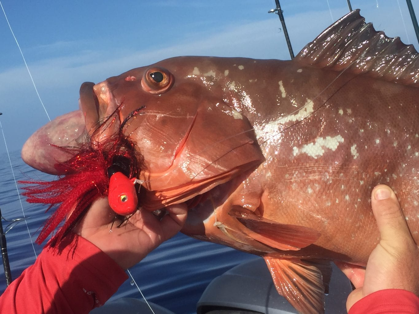 fisherman with grouper