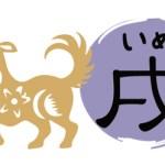 Year_Of_Dog