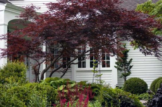 6 drvece u malom dvoristu
