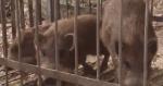 ポツンと一軒家 猪多発、棚田のある宮城県の一軒家編